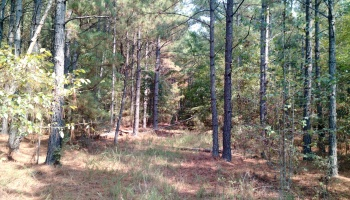 Carlton,Georgia,Land,427 Vesta Palmetto Rd,1033